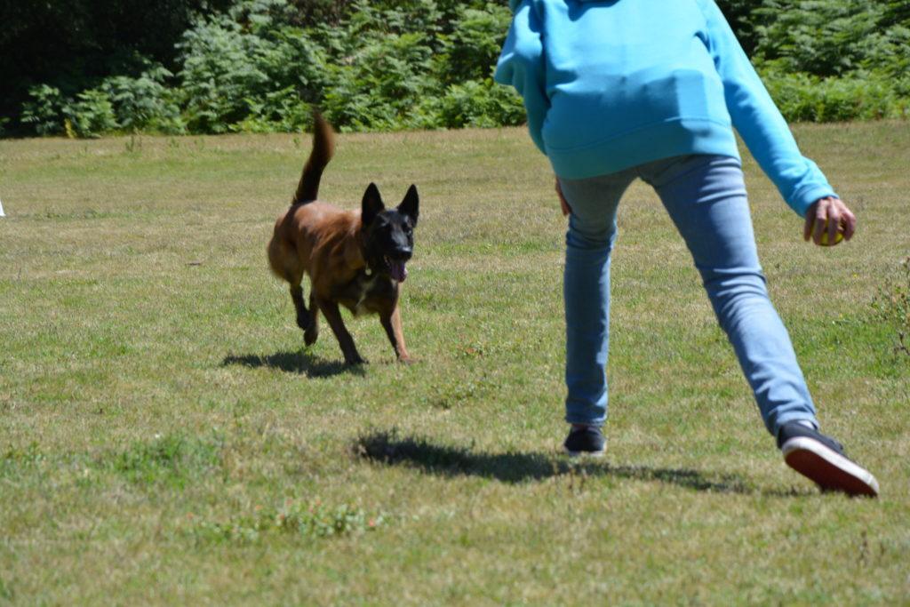 Educateur canin et comportementaliste canin à Auray, Crach, Carnac, La Trinité sur mer