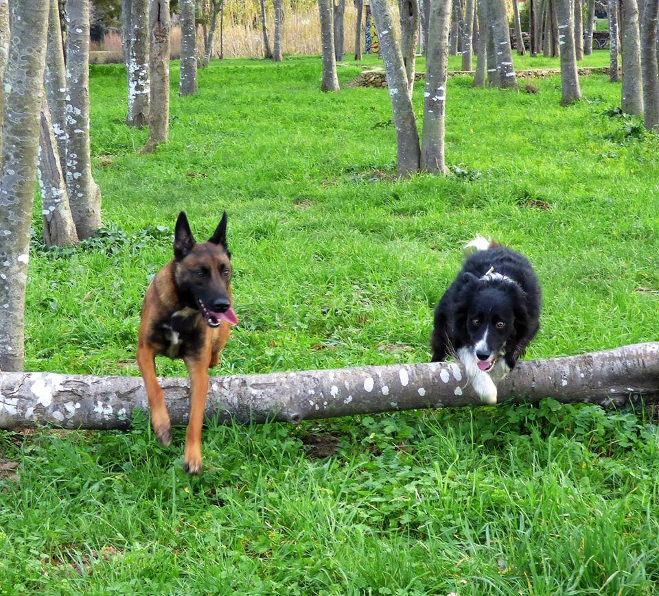 Educateur canin et Dressage chien Auray (56) en foret, Camors, Pluvigner, Le Bono