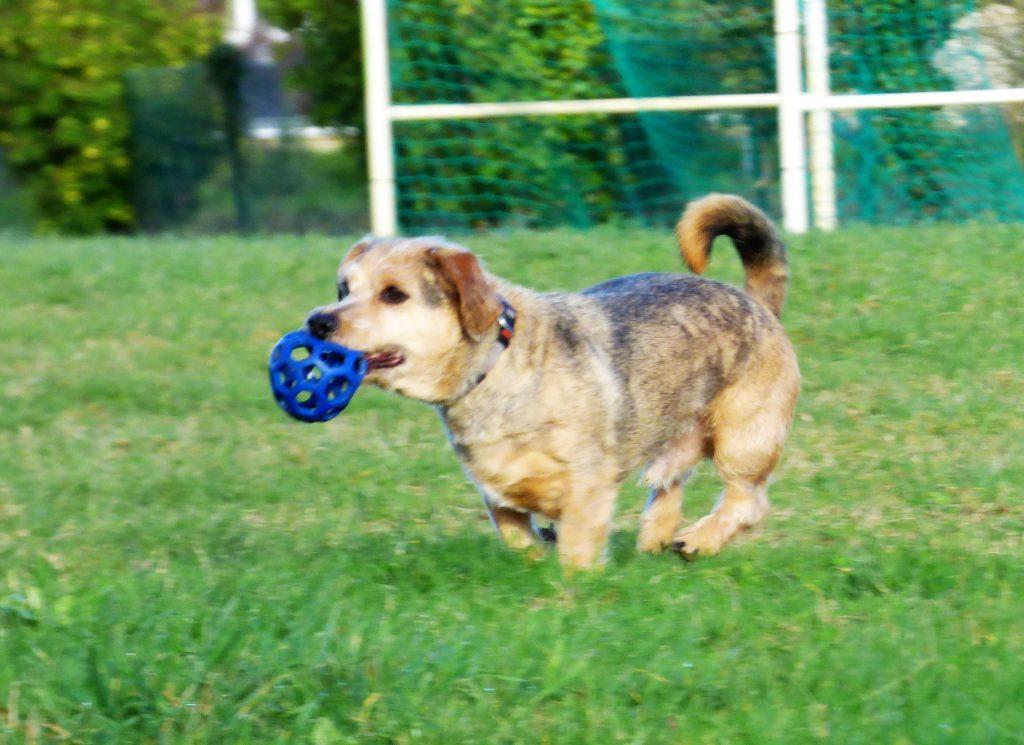 Education canine petit chien à Auray, Plouharnel, Crac'h, Carnac