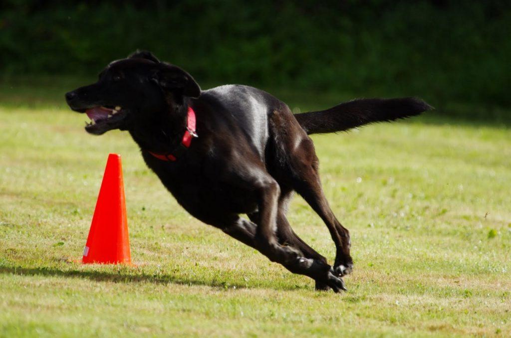 Cours Dressage chien à Auray, Camors et Crach