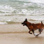 Dog Sport Educ, Dressage chien sur la plage Auray (Morbihan), Carnac, Crach, Quiberon