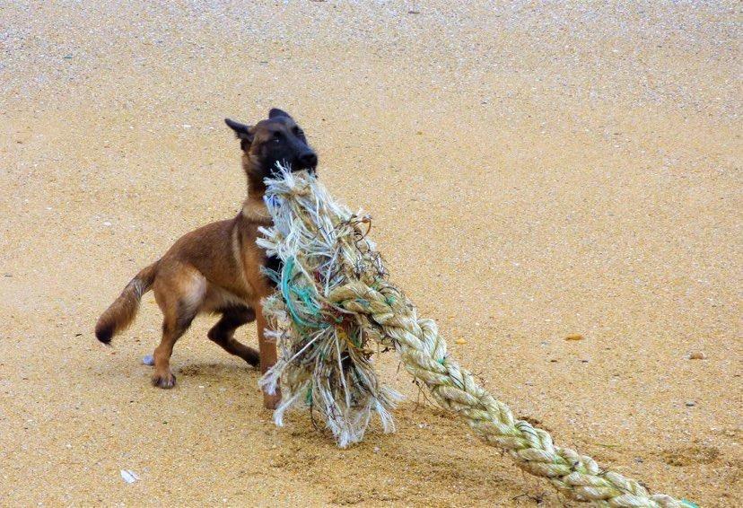 Dressage chien sur la plage (56) La Trinité sur mer Quiberon Plouharnel - Dog Sport Educ