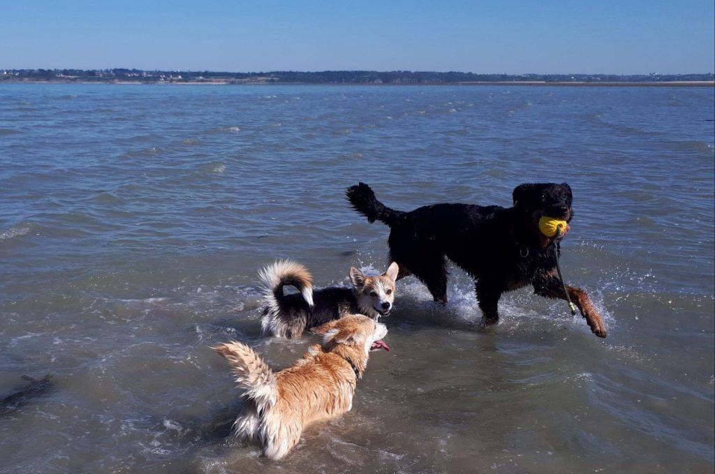 Dresser son chien - cours dans la mer à Auray, Quiberon, Carnac, Crach