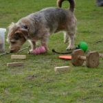Dresser un petit chien (Morbihan) à Pluvigner, Brech, Le Bono